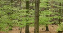 Christian Baldauf: Landesregierung muss die finanziellen Hilfen für den Wald aufstocken